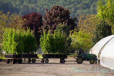 Moving Trees_9497