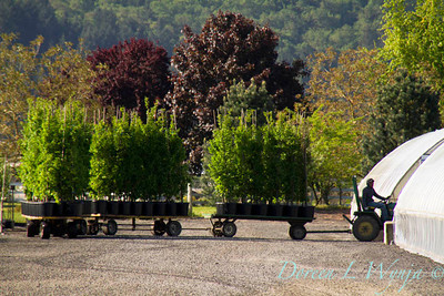 Moving Trees_9498