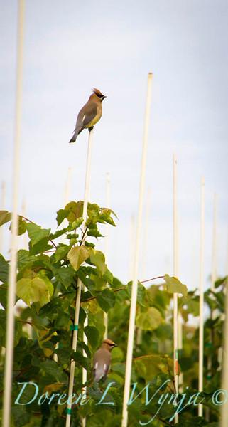 birds_4763