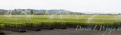 Can Yard Sprinklers_4697
