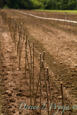 Bare root planting_2307