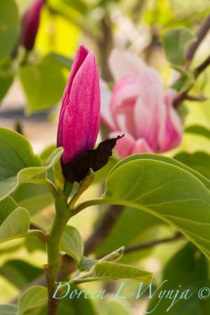 Magnolia Rose Marie_9855
