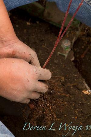Planting_4705