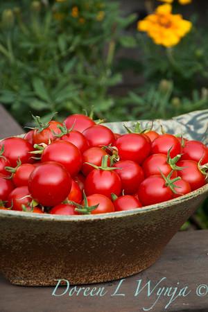 Tomato Nectar hybrid_3638