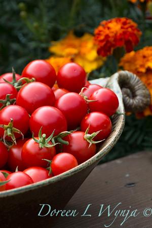 Tomato Nectar hybrid_3656