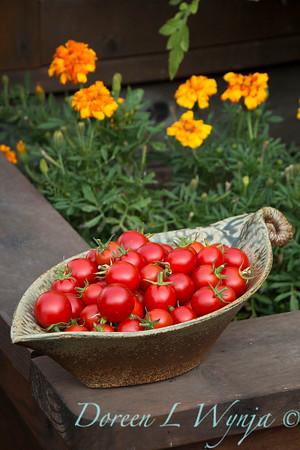Tomato Nectar hybrid_3639