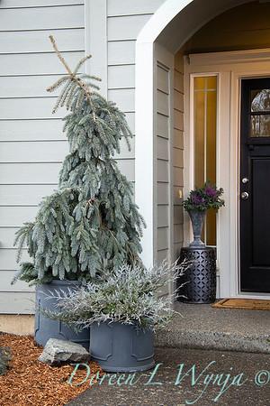 1939 Picea pungens 'The Blues' - 5228 Juniperus scopulorum 'MonOliver' front porch containers_1140