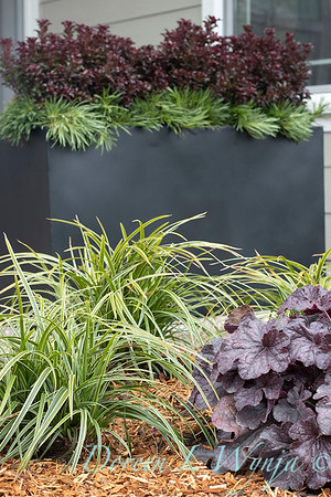 3583 Carex morrowii 'Ice Dance' - 44088 Heuchera x villosa 'TNHEUGB' GRANDE black coral bells_1307