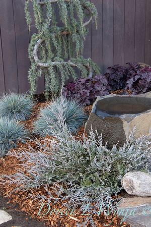 5228 Juniperus scopulorum 'MonOliver' Burly Blue - blue landscape_1106
