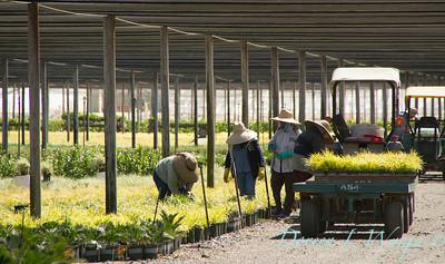 Visalia Can Yard_0542