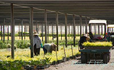 Visalia Can Yard_0535
