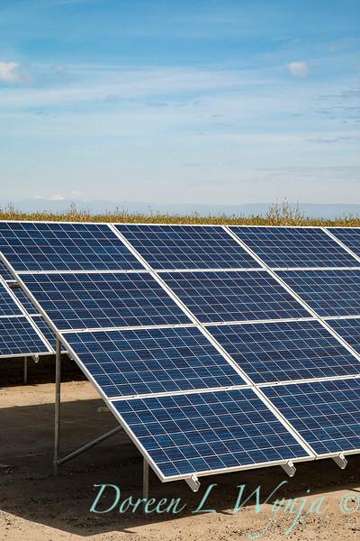 Solar panel energy for farming_7188