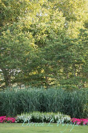 Angelonia angustifolia 'Angelface White' - Panicum virgatum 'Dallas Blues'_6039