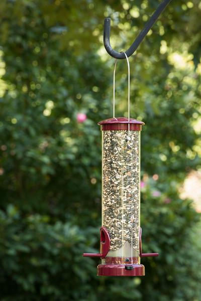 Bird feeder_6019