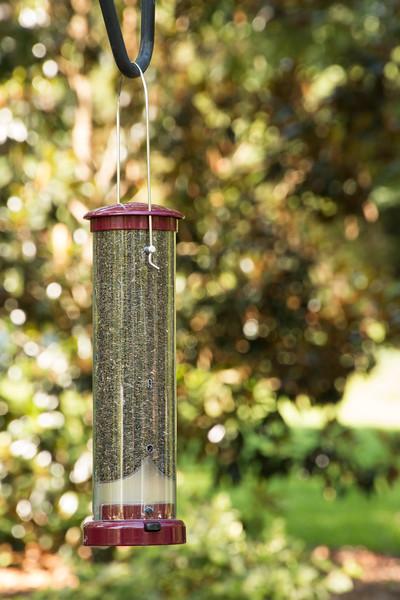 Bird feeder_6015