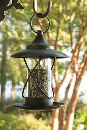 Bird feeder_6012
