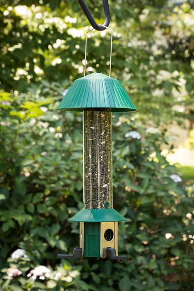 Bird Feeder_6022