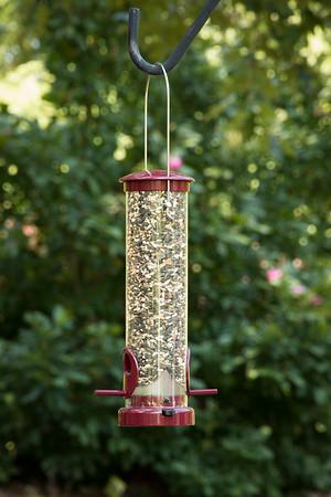 Bird feeder_6018