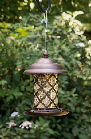 Bird Feeder_6023