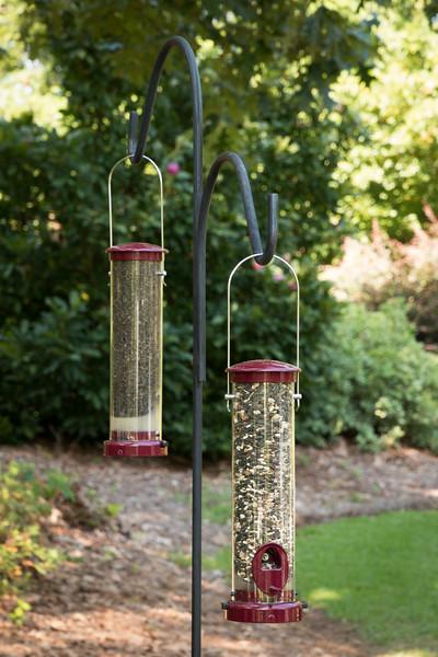 Bird feeder_6016