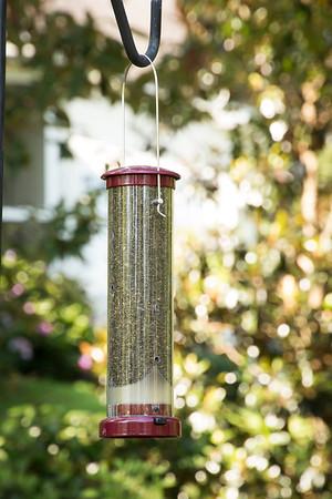Bird feeder_6013
