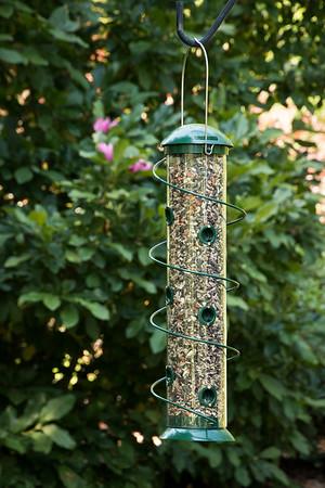 Bird Feeder_6021