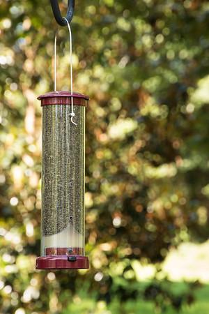 Bird feeder_6014