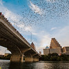 The famous colony of approximately 1.5 million Brazilian free-tailed bats  (Tadarida brasiliensis)  living in crevices beneath the Congress Avenue Bridge in Austin, Texas has attracted millions of visitors to enjoy its spectacular emergences over the past 35 years.  Small signs simply warn not to handle the bats, and despite countless close encounters no one has ever been harmed. The bats attract millions of tourist dollars each summer and consume tons of crop and yard pests each night.  Emergences