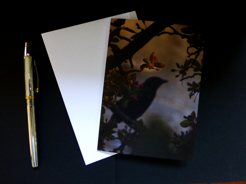 "Custom blank notecard:  Blackbird in Rose Branches. Greeting cards can be purchased on this website and <a href=""https://www.zazzle.com/imagesbycynthia/collections"">https://www.zazzle.com/imagesbycynthia/collections</a>"