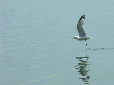 007 Seagull