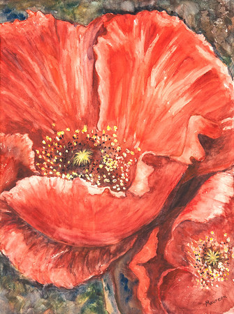 Poppy Original Water Colour By Maureen