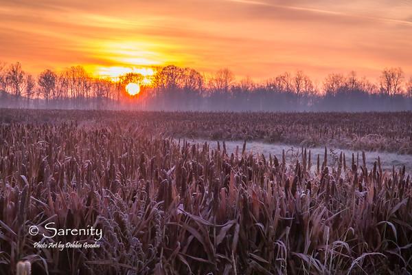 Fields Sunrise