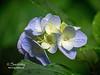 Blooming plants surround this hidden gem!