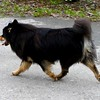 BEARSPAW LAPPHUNDS :
