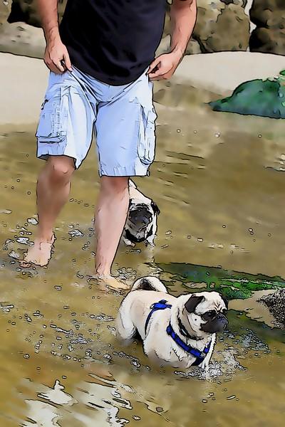 Pugs at Agate Beach