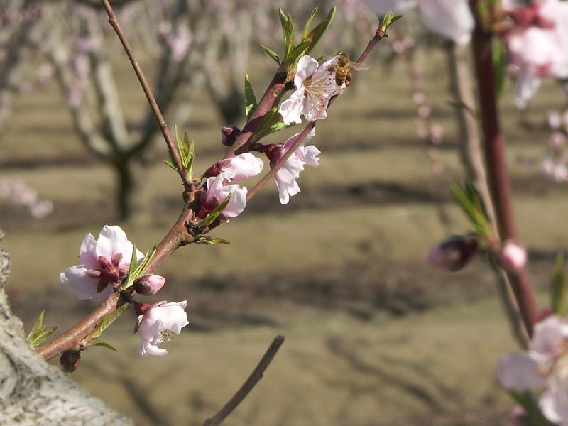 Bloom; Blossom; 2009