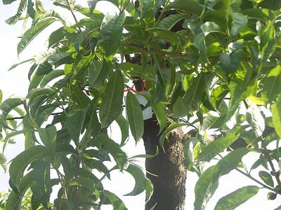 Spring Bright Nectarine