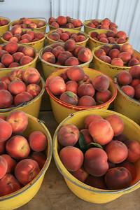 Sweet Dream Peach