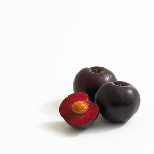 Black Splendor Plum