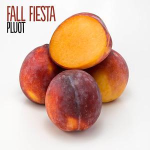 Fall Fiesta Plumcot
