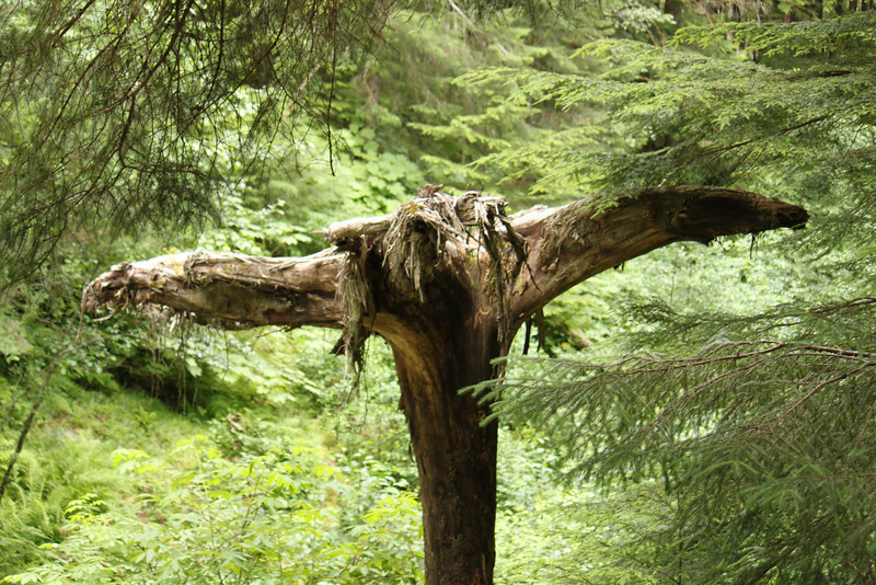 """An """"eagle tree"""".<a href=""""http://www.geonames.org/maps/google_58.363007_-134.549155.html""""> (Map link)</a>"""