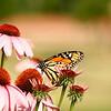 Butterfly Garden..