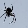 August 10, 2010<br /> <br /> Mr. Spider...
