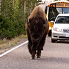 Sept 16, 2009<br /> Slower Traffic Please Keep to the Right...<br /> <br /> Yellowstone National Park...