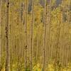 September 9, 2009 (09-09-09)<br /> The Colorado Aspens...
