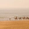 November 24, 2010<br /> <br /> Camel Caravan on the Mediterranean