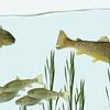 Fish Tank NKDC
