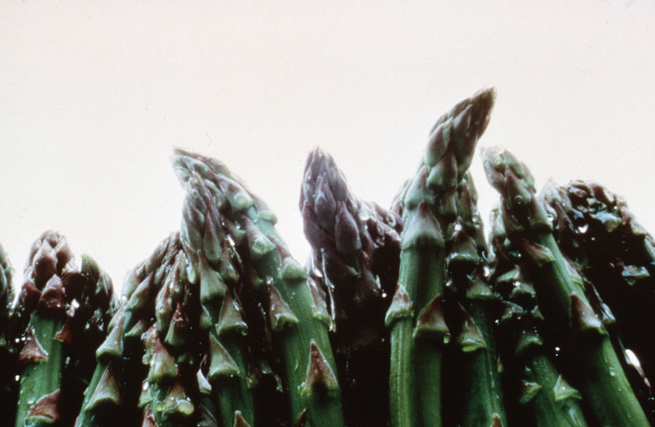 1984-XX-XX - TIC - Asparagus from The Irvine Ranch