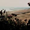 1980-XX-XX - TIC - Looking North Across The Irvine Coast (El Morro Trailer Park on the Left)