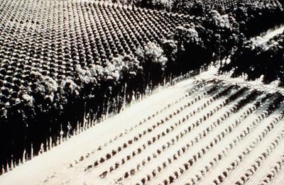 19XX-XX-XX - TIC - Agriculture